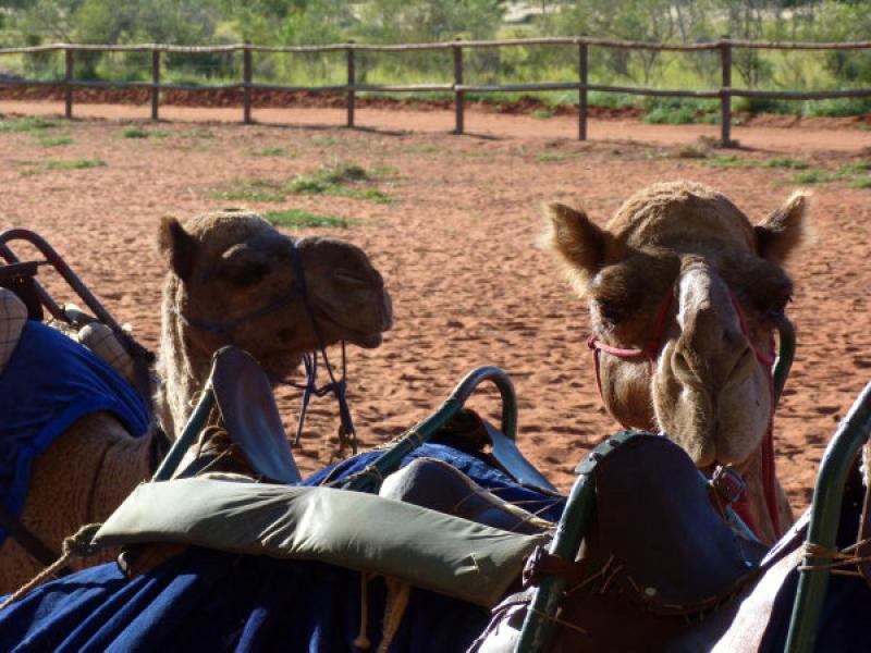 Camels Kings Creek